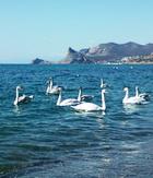 И даже зимой вСудаке можно прекрасно отдохнуть: путешествовать погорам, анаморе вСудаке можно увидеть ипокормить лебедей